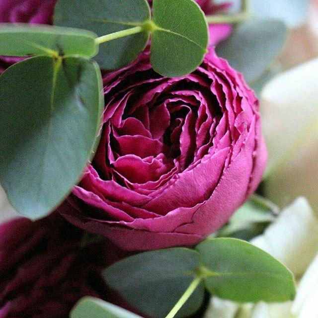 Фото наших цветов