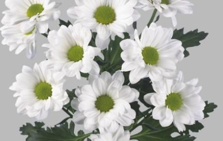 И снова в нашем магазине появились самые свежие и красивые цветы. Мы стараемся, чтобы Вы получали только самое лучшее. Спешите заказать или приезжайте к нам на осмотры =)