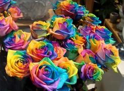 ТОП-10 самых удивительных и редчайших цветов в мире