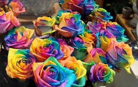 Каждый из нас видел как выглядит роза, ромашка, фиалка и т.д. Это все обычные цветы, которые можно легко вырастить или купить в магазине. Однако мы даже себе не представляем, сколько в природе существует цветов, которые являются чрезвычайно редкими, которые одним своим внешним видом просто поражают. Мы составили рейтинг самых необычных цветов нашей планеты. Красная камелия […]
