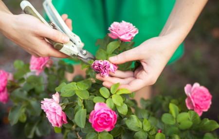 Зима — суровое время года. Некоторые растения легко переживают холода, а некоторые просто не в состоянии выжить. Розы очень чувствительные цветы, и требуют особого ухода. Начинать ухаживать и готовить розы к зиме нужно еще с осени. Правильный уход за розами осенью — залог их успешного и пышного цветения летом. Сначала нужно определить, какие именно розы […]